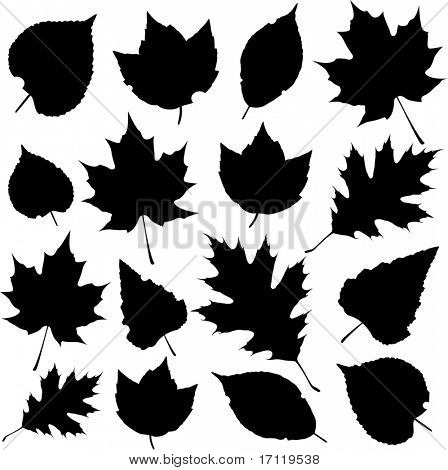 Autumn leaf silhouettes