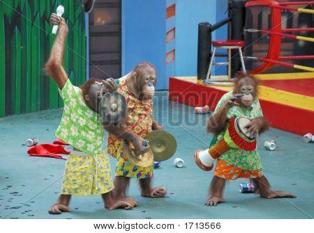 Monkey Orchestra