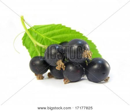 Black currant cluster with green leaf isolated