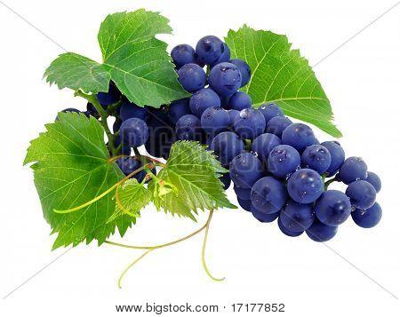 Cluster de uva fresca com verde folhas isoladas com traçado de recorte