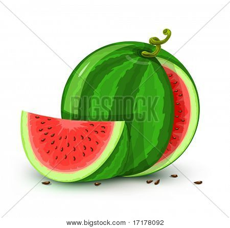 vector illustration of water melon fruit isolated on white background