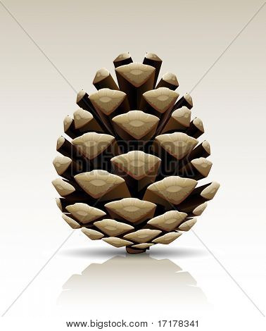 single pine tree cone isolated vector illustration