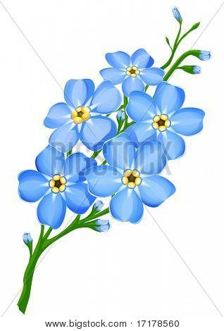 ramo de flores de nomeolvides azul aislado - ilustración vectorial