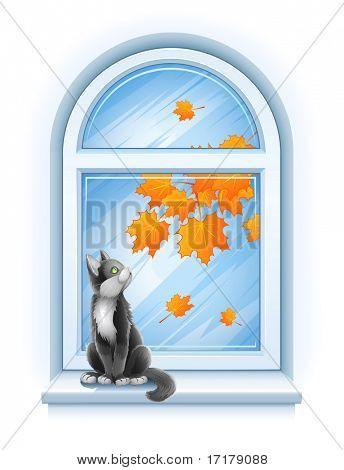 kitten sitting on windowsill of autumn window