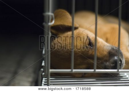 Brown Puppy Sleeping In Cage