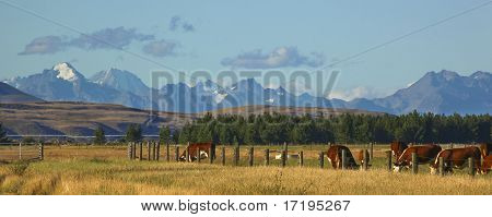 New Zealand Farm Landscape