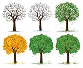 vector silhouette of autumn, spring, summer and winter season tree isolated on the white background