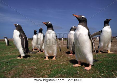 Meeting Penguins