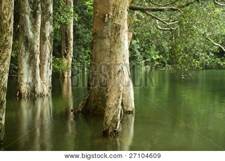 it is some tree in water in spring
