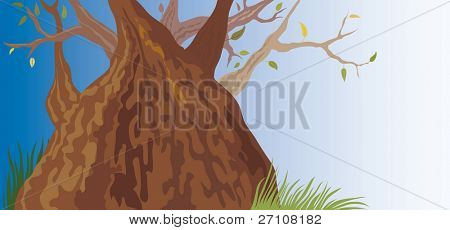 Old Tree (vector). In the gallery also available XXL jpeg image made from this vector