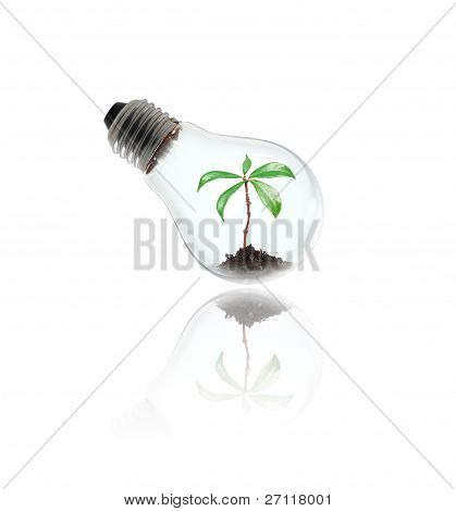 bulb lamp with little tree
