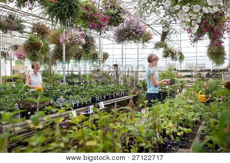 People shopping for plants at garden center