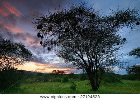 Pink sunrise. Africa. Kenya. Samburu national park.
