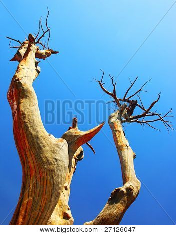 Dry desert tree over blue sky