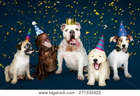 Group of puppies celebrating a