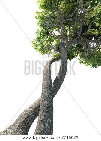 ADN modificado árbol