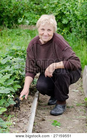 The elderly woman works on kitchen garden