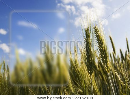 Golden ears of wheat against the blue sky with half-transparent Vista menu style frame