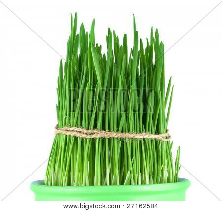 Green grass in a pot tied with a rope isolated on white