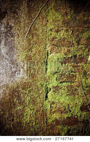 moss wall background texture