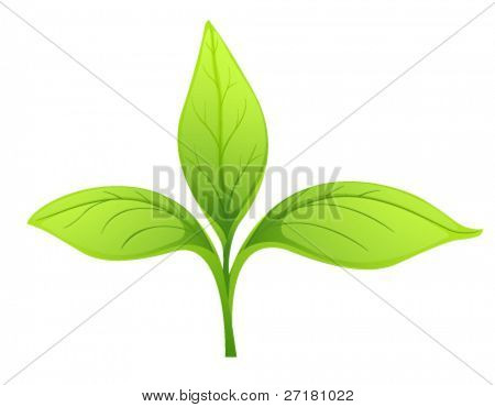 Three young green leaf on white background