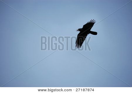 Black crow flying against blue sky