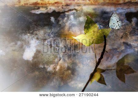 Ahorn und Schmetterling mit schönen Hintergrundfarbe