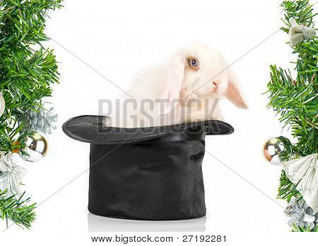 White rabbit at black hat - symbol of 2011 new year isolated on a white background
