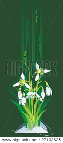 Blooming Snowdrops on green background