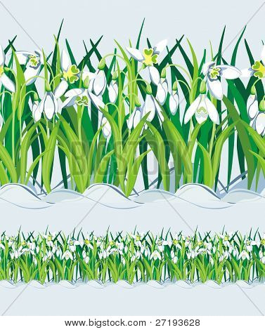 Field of Snowdrops. Seamless. Vector