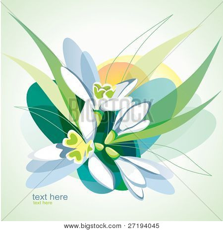 Vector illustration of blossoming snowdrops.