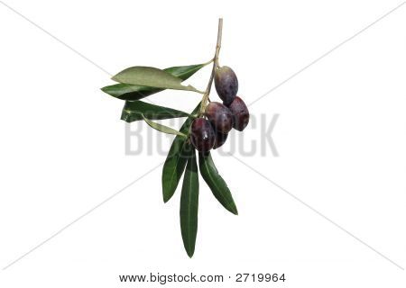 Olives On Branch Isolated On White Background