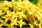 image of yellow flower  - yellow flower close up at day - JPG