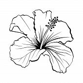 Hawaiian Hibiscus Laser Cut Vector. Fragrance Outline Flower. Mallow Chenese Rose. Black And White F poster