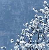 pic of white flower  - Blooming spring tree background - JPG
