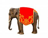 Elephant Has Beautiful And Large Isolated On White Background. Colorful Painted Elephant  ,beside De poster