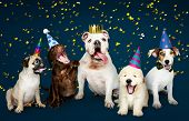 Group of puppies celebrating a new year poster