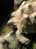 stock photo of the hare tortoise  - Turtle head and shell in sumer day  - JPG