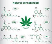 Chemical Formulas Of Natural Cannabinoids In Plants Of The Genus Cannabis : Tetrahydrocannabinol (th poster