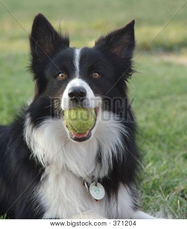 Dog With A Ball In His Mouth