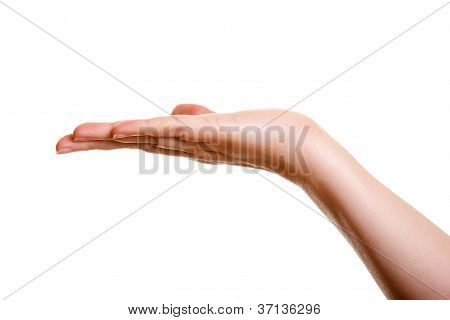 Woman's Hand, Palm Up