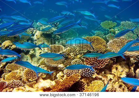 Fishes in corals. Maldives