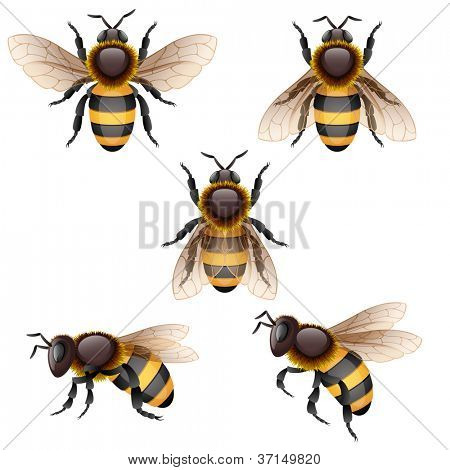 Bees on white - raster version