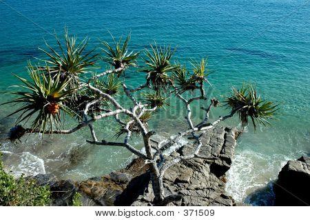 Pandanus Tree Over The Ocean