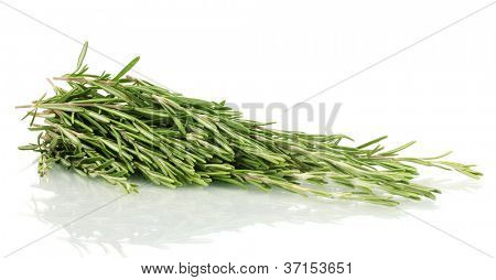 fresh green rosemary isolated on white