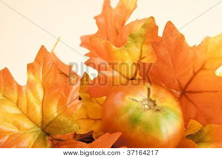 Tomato and Fall Leaves