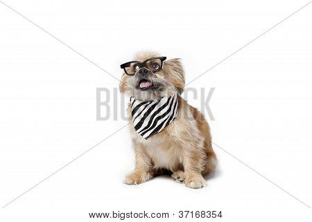 pets with fashion sense