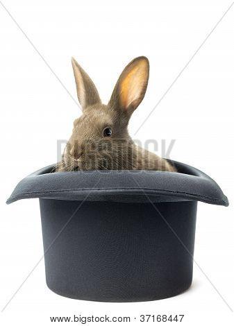 rabbit inside the hat