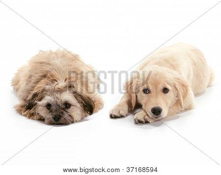 Sad Puppies