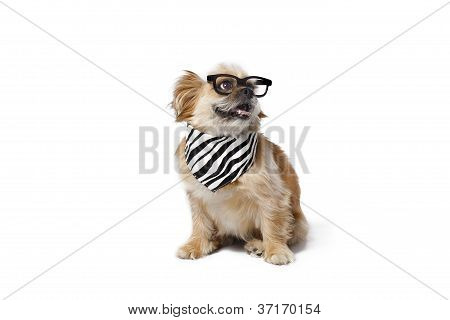 smart looking pet
